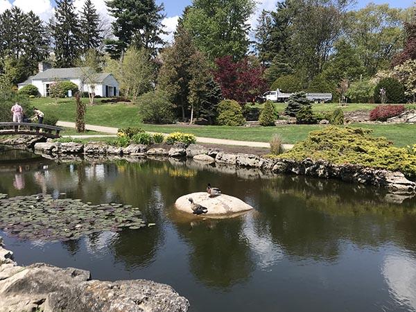 Oakwill Gallery - Garden